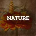ART-Nature-0